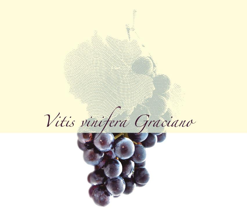 Imagen uva graciano